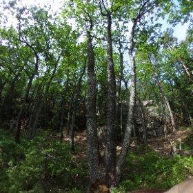 """Paraplyträd nr 4 """"Trippel Eken"""" i Skarnhålans gammelskog. Genom att sponsra trädet skyddar du det och dess närmaste omgivning för evigt. https://naturarvet.se/paraplytrad-och-skogsrutor-i-skarnhalan/ #theta360"""