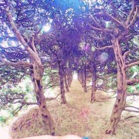夢見ヶ崎動物公園の木のトンネル #theta360