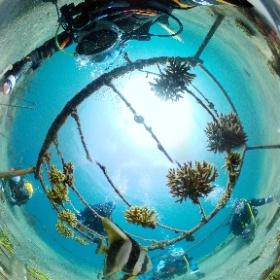 2021/05/08 獅子浜 #ツバメウオ #padi #diving #フリッパーダイブセンター #伊豆大島 #theta #theta_padi #theta360 #群馬 #伊勢崎 #ダイビングショップ #ダイビングスクール #ライセンス取得 #padiライフ