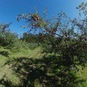 2018年10月 果樹園の画像。オホーツク・オーチャード株式会社 #theta360