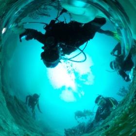 2019//11/23-24 大瀬崎ツアー  #padi #diving #フリッパーダイブセンター #大瀬崎 #theta #theta_padi #theta360 #群馬 #伊勢崎 #ダイビングショップ #ダイビングスクール #ライセンス取得