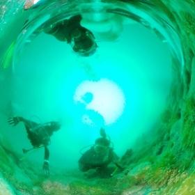 2020/08/22-23 大瀬崎、潜り放題ツアー #padi #diving #フリッパーダイブセンター #大瀬崎 #theta #theta_padi #theta360 #群馬 #伊勢崎 #ダイビングショップ #ダイビングスクール #ライセンス取得