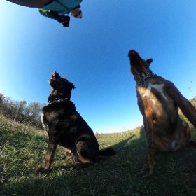 """""""Who's a good boy?""""  These guys! #woof #dogs #pitbull #rotiewannabe #goodboys #theta360"""