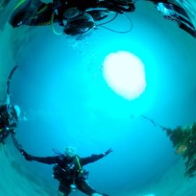 2020/12/24 江の浦、水中クリスマスツリー #padi #diving #フリッパーダイブセンター #江の浦 #theta #theta_padi #theta360 #群馬 #伊勢崎 #ダイビングショップ #ダイビングスクール #ライセンス取得 #X'mas #クリスマスツリー