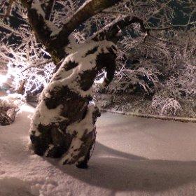 2018.02.24 #冬に咲くさくらライトアップ 弘前公園追手門前にて撮影。 #theta360