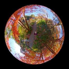 東山動植物園2020.12/5 #momiji3d #theta360