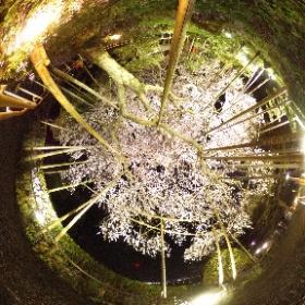岐阜県揖斐郡池田町さくら会館2017しだれ夜桜 #theta #ikeda #gifu #japan #sakura #sakura3d #theta360