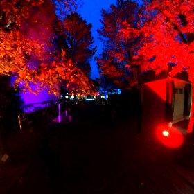 愛媛大学の紅葉通り、ライトアップをパノラマ撮影してみまTHETA。投光器の設置、毎日手作業でやってるみたい。御苦労様。 #愛媛大学 #紅葉 #ライトアップ #もみじ #theta360