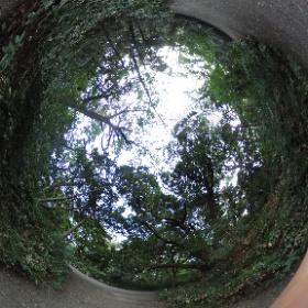 自然教育園に歩きに行ってきました。 素敵な公園ですね。 歩いて元気になりました。 ドイツ式カイロプラクティック逗子整体院 www.zushi-seitai.com  #theta360