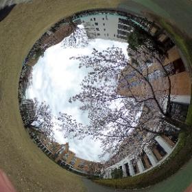 駿河台大学 2016年度入学式 #sakura3d
