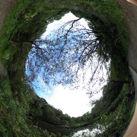 東京の自然教育園です。 気持ちがいい公園です。 ドイツ式カイロプラクティック逗子整体院 www.zushi-seitai.com  #theta360
