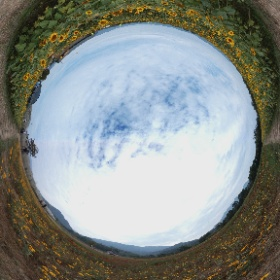 1060205 永齡農場 向日葵迷宮 #theta360