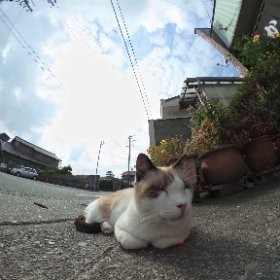 少々早く撮影先に到着! 浜松の餃子屋さん。 #theta360