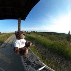 Where's Teddy Today #theta360
