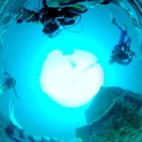 2021/01/23 大瀬崎・漁礁 #padi #diving #フリッパーダイブセンター #大瀬崎 #theta #theta_padi #theta360 #群馬 #伊勢崎 #ダイビングショップ #ダイビングスクール #ライセンス取得
