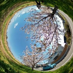 新草津川の桜 2020/04/04