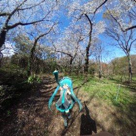 代々木公園なう! #miku360 #theta360