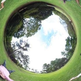 Picnic in Hikarigaoka park Tokyo