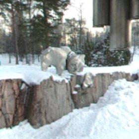 シベリウス公園、ヘルシンキ。 2月、2006年。
