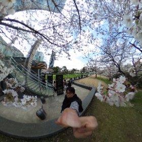 #sakura3d #thetaのある生活 #360度カメラ #roppongi #tokyo #ミッドタウン  #20180324 #theta360