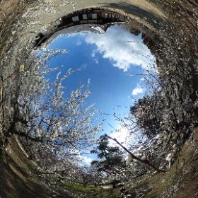 弘道館正庁です。 http://www.koen.pref.ibaraki.jp/park/kodokan01.html #theta360