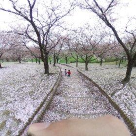 櫻の園 #theta360