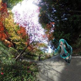 今年は暖かいから、色付くのが遅かったな。ようやく寒くなったから、これからもっときれいになるかもね #miku360  #theta360