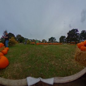 Pumpkin patch at Wyevale Garden Centre 2 #theta360 #theta360uk