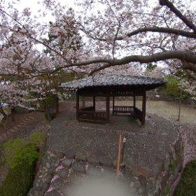 日出町『日出城跡の桜』 #sakura3d #theta360
