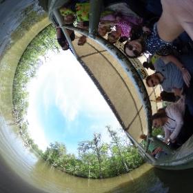 Swamp Tour Honey Island USA roadtrip #theta360