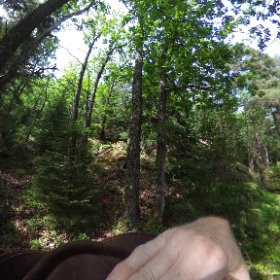 Paraplyträd p2 i Skarnhålans gammelskog. Genom att bli fadder till trädet så skyddas det och dess närmaste omgivning för evigt. https://naturarvet.se/paraplytrad-och-skogsrutor-i-skarnhalan/ #theta360