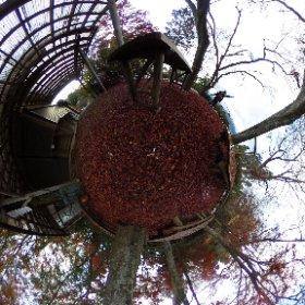 高尾山×紅葉台×紅葉じゅうたん! 指で動かすと面白い〜 #momiji3d