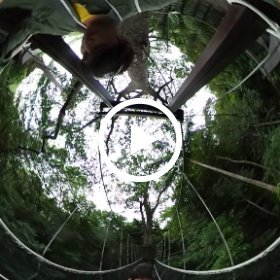 #Jungle #walk #video 2 #canopy #bridge #borneo #malaysia #adventure  #theta360