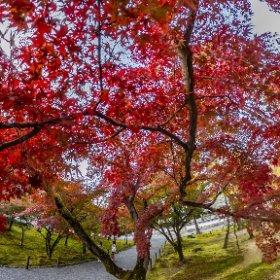 京都、南禅寺 紅葉🍁2019 #thetaz1 #SingleDNG #theta360