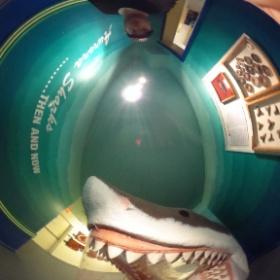 Shark attack!!  #theta360