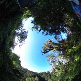 360 Photo 19 of our #HawaiiTrip January 1, 2020. Trail to Akaka Falls (near Hilo), one more view.  #RememberingJeri  #theta360