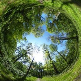 Balade dans le bois de Grand-Leez