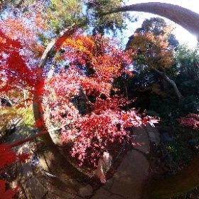 201207 本土寺 松戸 #momiji3d #theta360