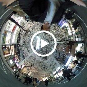 #Yaesu #sakura #Festival  #360video #360view #night #sky #sakura2016 #theta360