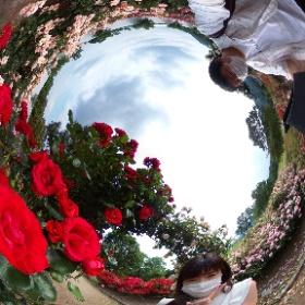 香りのバラ園③ #theta360