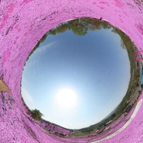 北海道 東藻琴 ひがしもこと芝桜まつり