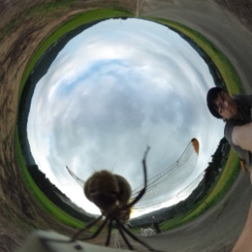 Dragonfly touching a lens! #theta360