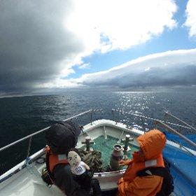 [360度撮影]知床岬に向かうミニくまちゃん #theta360