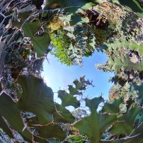 Rio de Janeiro - Botanical garden #theta360 #theta360de