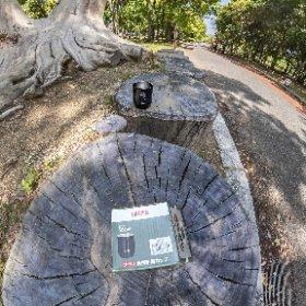 Eucalyptus Memory of Typhoon in 2018 #DFE #HDR9 #thetaz1 #theta360