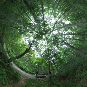 大山のブナの森 川崎さんからお預かりしたリコーの全天球カメラで撮ってみました。 これは今までの感覚とは全く違う写真が撮れて面白いですね〜!(*^^*)