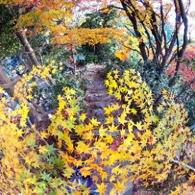 360 Photo Walk in IKOMA Mountain Range, 龍尾寺 参道の黄葉 #momiji3d #IKOMA_Nature_Walk #JAPAN Autumn Foliage 2018 #theta360
