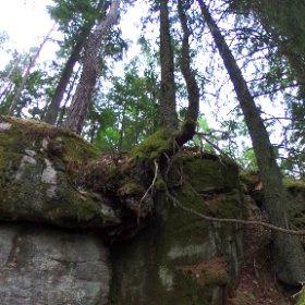 """Paraplyträd nr p12 """"Granen i skrevan"""" i Skarnhålans gammelskog. Genom att sponsra trädet så skyddar du det och dess närmaste omgivning för evigt. https://naturarvet.se/paraplytrad-och-skogsrutor-i-skarnhalan/ #theta360"""
