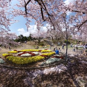 #sakura3d 日立かみね公園 #theta360