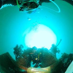 2021/08/26 大瀬崎 #100ダイブ #padi #diving #フリッパーダイブセンター #湾内 #theta #theta_padi #theta360 #群馬 #伊勢崎 #ダイビングショップ #ダイビングスクール #ライセンス取得 #padiライフ